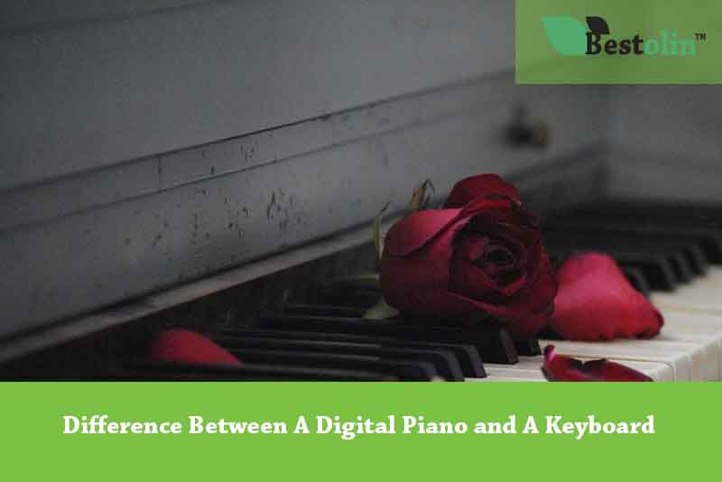 Difference Between A Digital Piano and A Keyboard